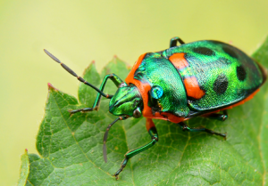 The Signs of Pestilence How to Keep the Bugs Out this Spring