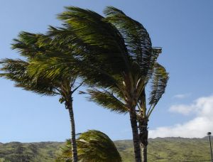 Weathering the Storm Tips for Maintaining a Resilient Home